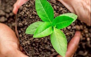 organic-gardeniing-img